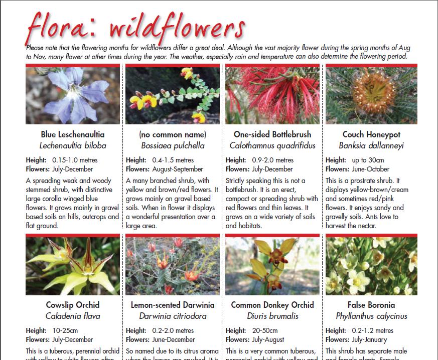 Natural Wildlife Flora For The Track The Track Bibbulmun Track